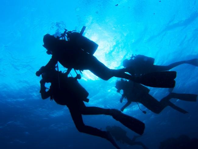 体験ダイビングで水中の世界をお楽しみください