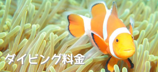 久米島 ダイビング料金